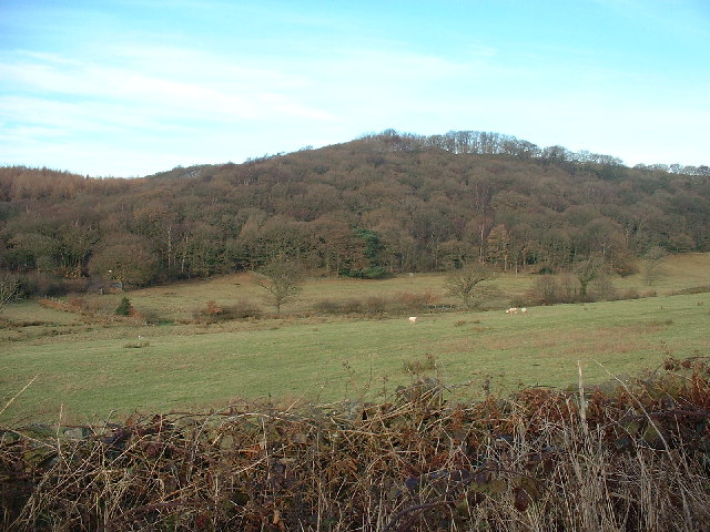 Woodland Long Ellers