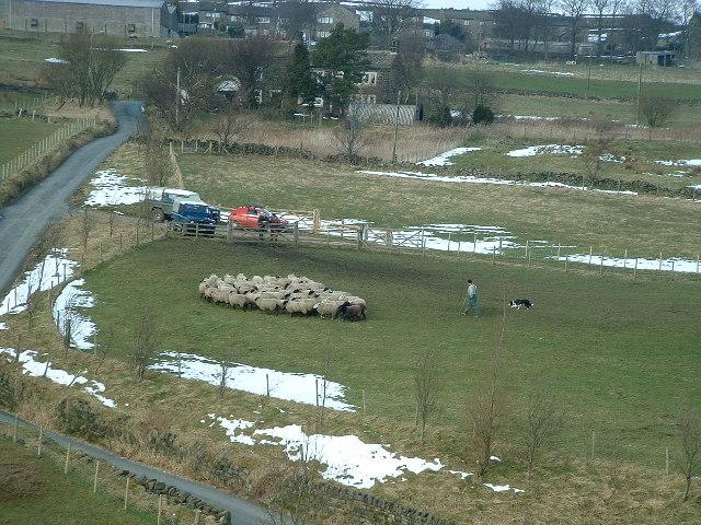 Sheep and Barley Croft