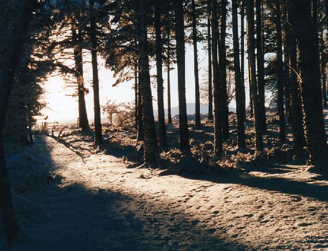 Winter in Scolty Woods.