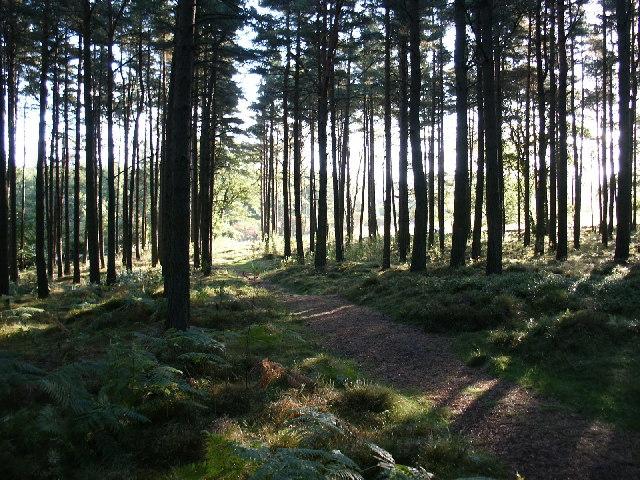 Kirkhill Forest, Tyrebagger hill.