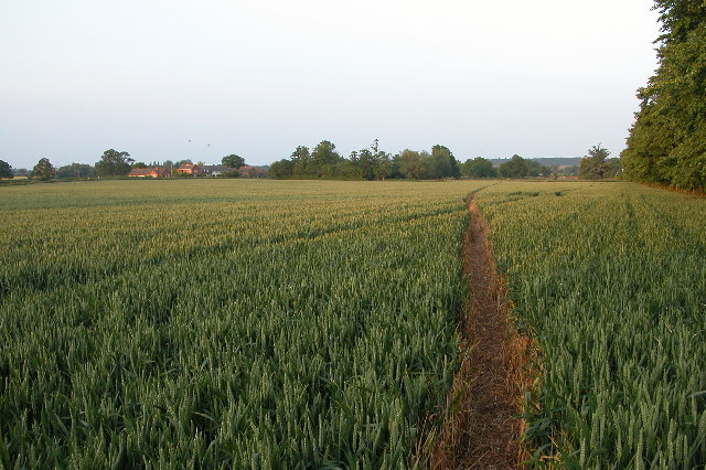 Footpath through a cornfield to Earl's Croome