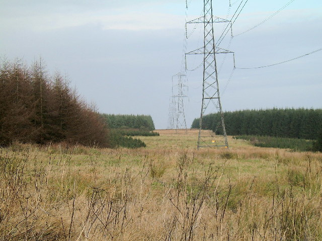 Pylons through the forest