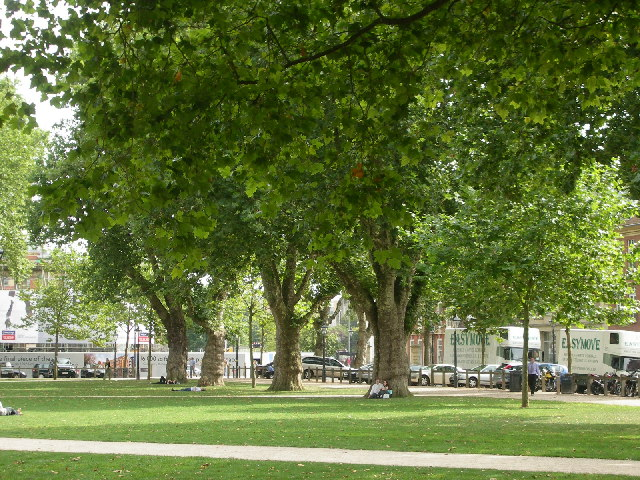 London Planes Queens Square