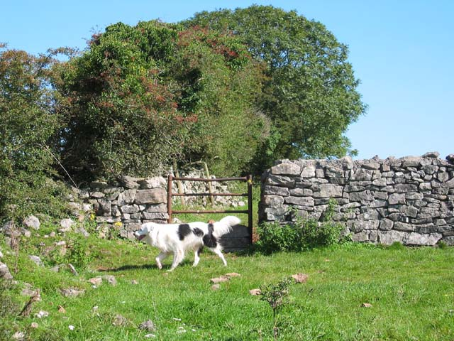 Drystone Wall near Higher Pitts Farm