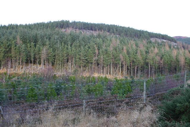Forest near Loch Ruthven