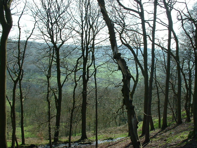 Through the woods to Shibden Dale