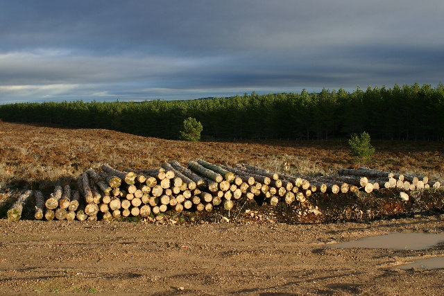 Forest operations near Loch Ashie