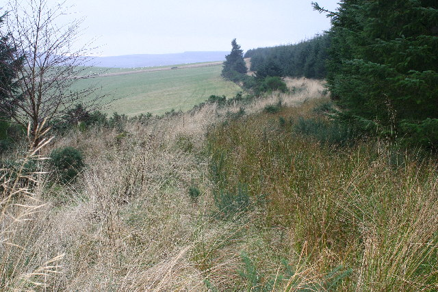 Forest track on Hill of Milleath