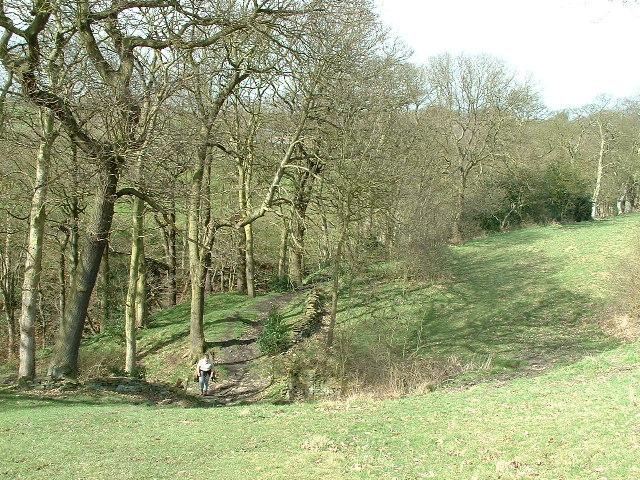 Mixed Woodland near Dean House