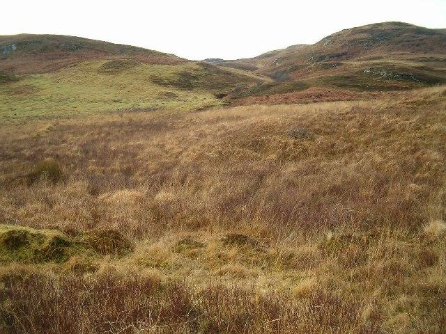 Boggy Hillside