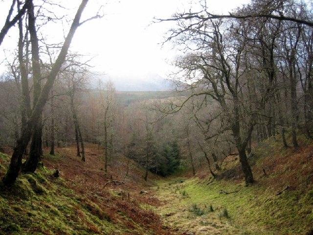 Tulloch Wood