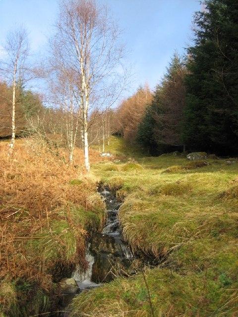 Caochan Rainich Beag in Tulloch Wood