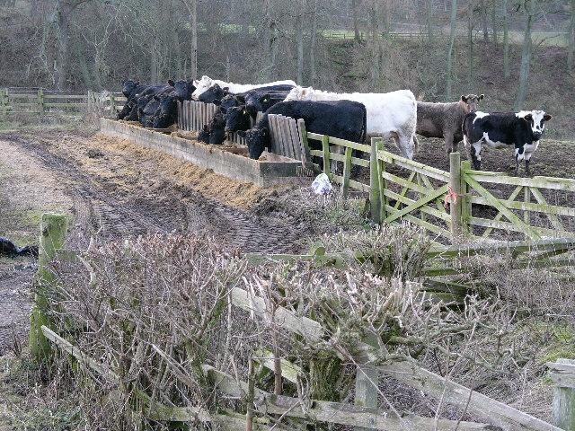 'Crookedshaws' Farm