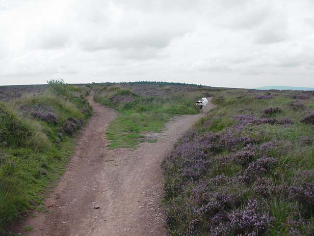 Footpaths on Blackdown