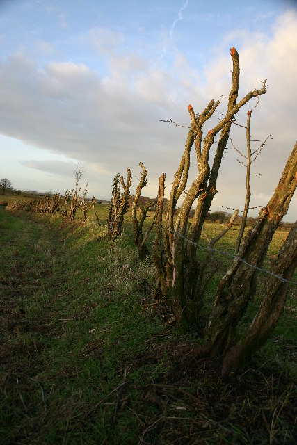Extreme Hedging