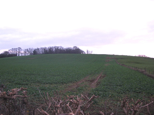Stourton Plantation