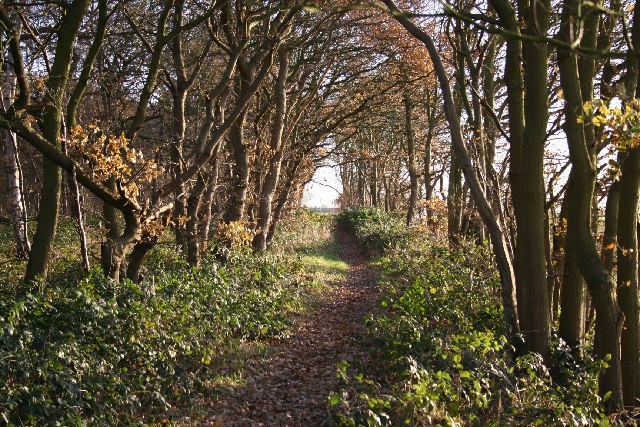 Footpath in Pickworth Wood