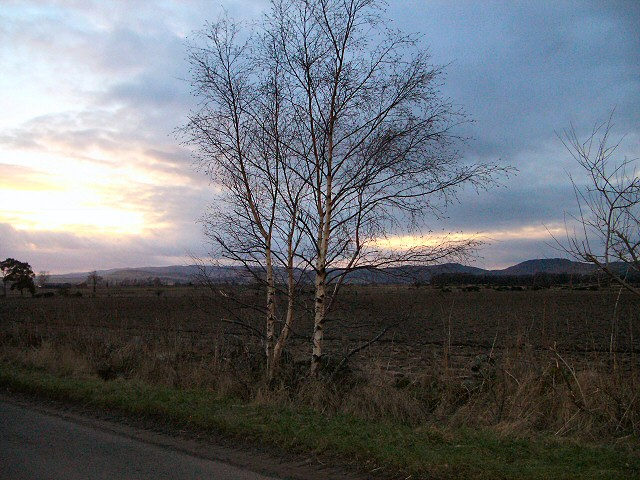 Silver birch and ploughed field