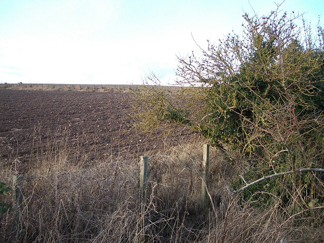 Ploughed field and hedge