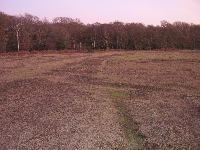 Dusk on the edge of the New Forest Golf Club