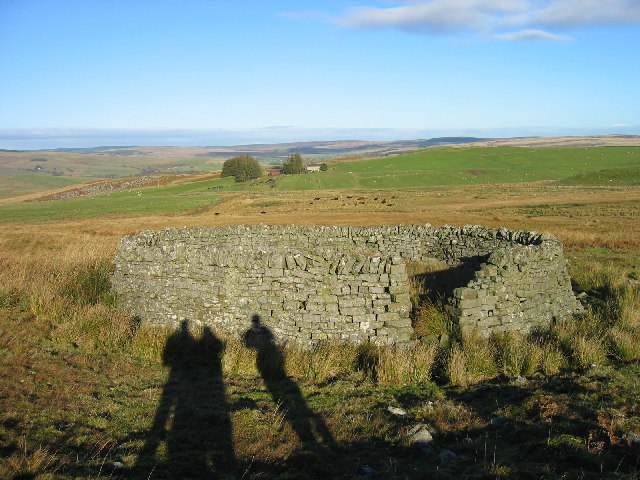 Sheepfold on Whitchester Moor