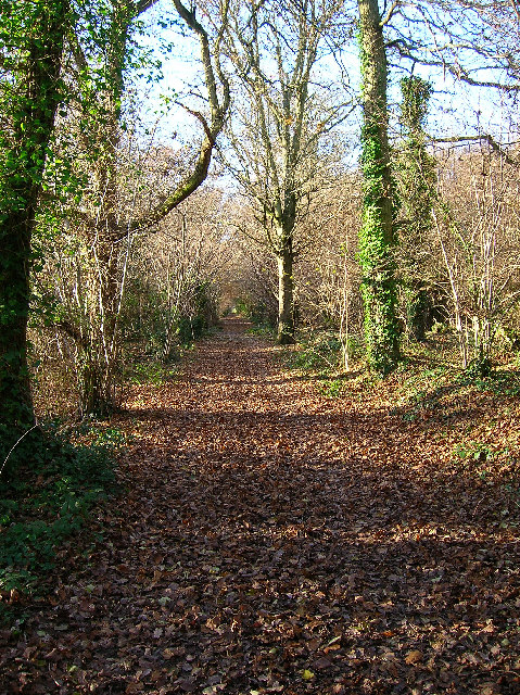 The Broad Walk bridleway, Ashling Wood