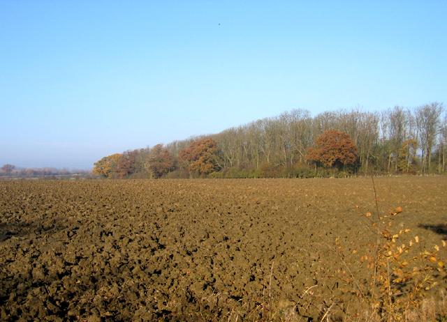 Woodland, Madingley, Cambs