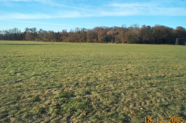 Loudwater: Welling Grove wood