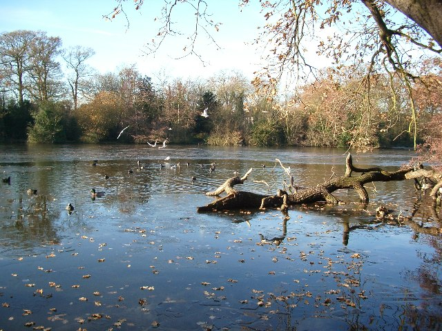 Frosty lake, Epping Forest