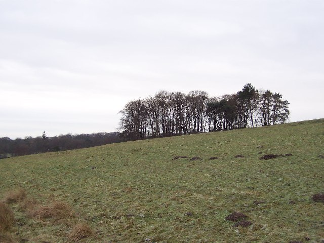 Copse between Fleets and Cracoe