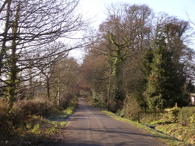 Pinkney Lane, near Lyndhurst, New Forest