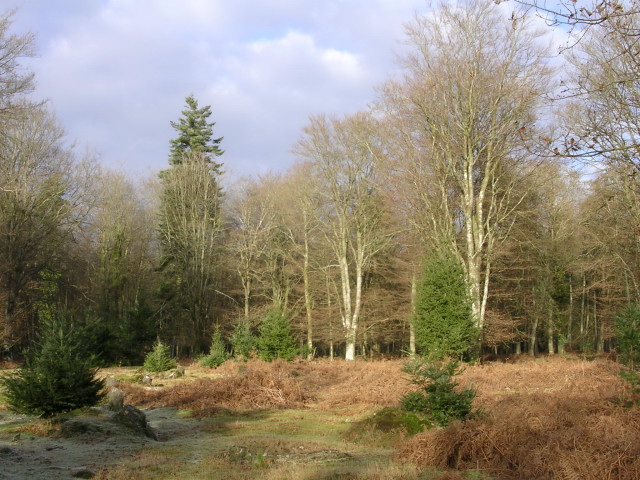 Aldridgehill Inclosure, New Forest