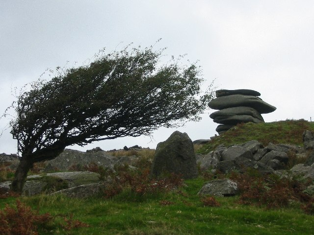 Windswept tree and the Cheesewring