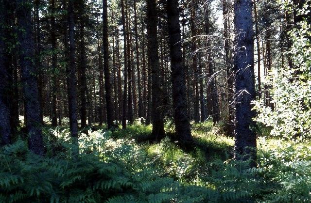 Femnock Wood