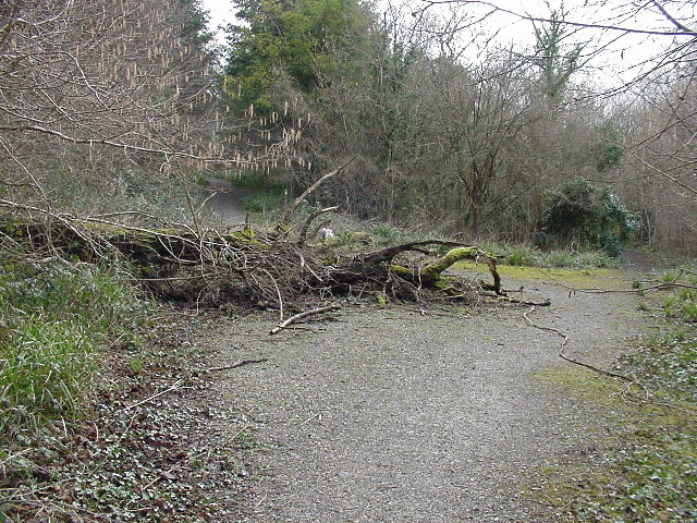 Fallen Tree, near Tintern