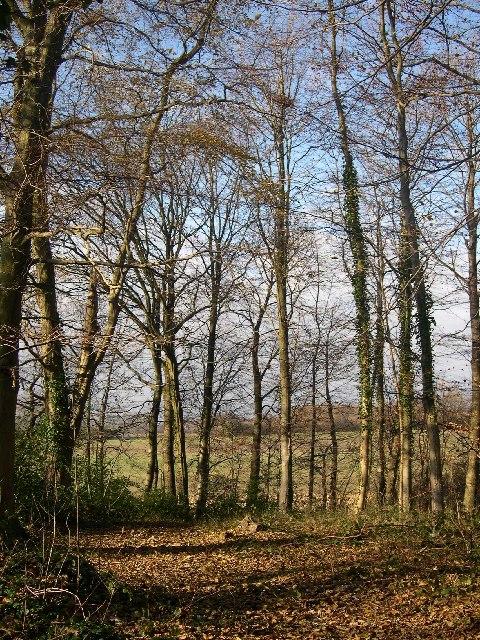 Woods near Hundred Acres