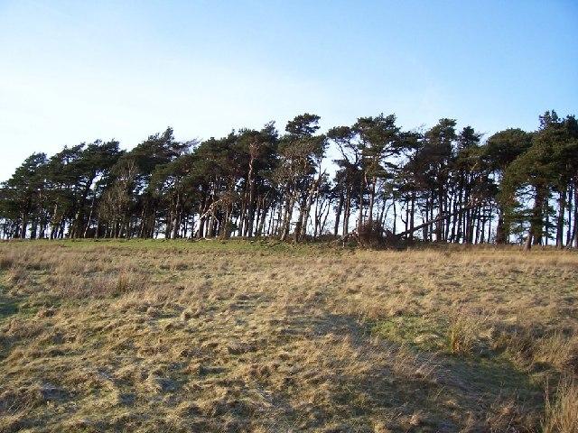Top wood at Dyke.