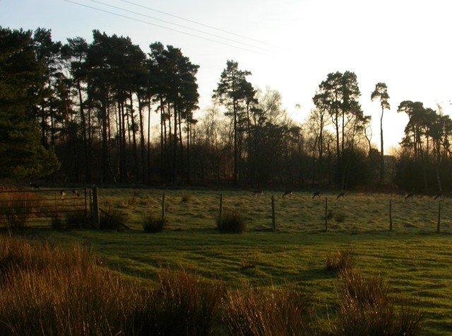 Old Lodge Nature Reserve