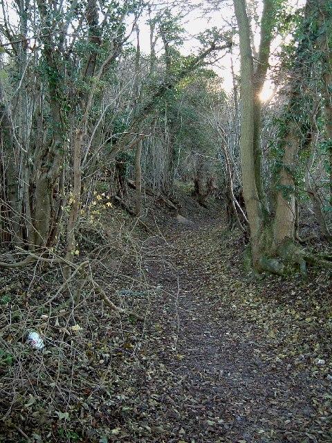 Bradenham Wood - A pathway