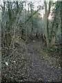 SU8298 : Bradenham Wood - A pathway by Rob Farrow