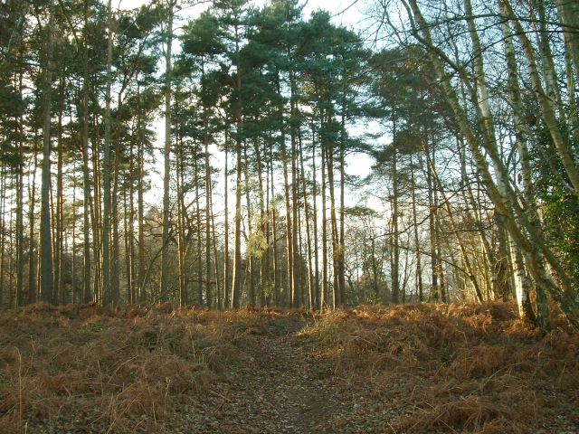 Nr Fittleworth Common