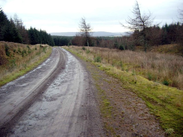 Track in the Whitelee Forest