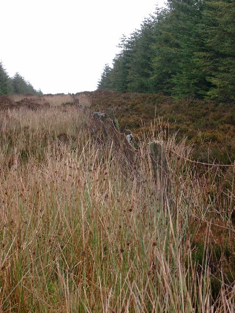 Firebreak (and county boundary) in Whitelee Forest