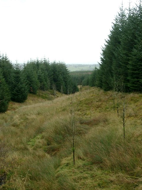 Course of the Threepland Burn, Whitelee Forest