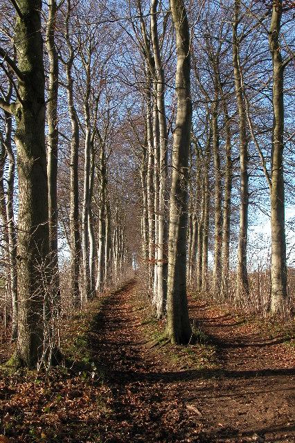 Gloucestershire Way near Notgrove