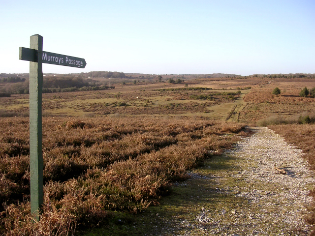 Murrays Passage, Withybed Bottom, New Forest