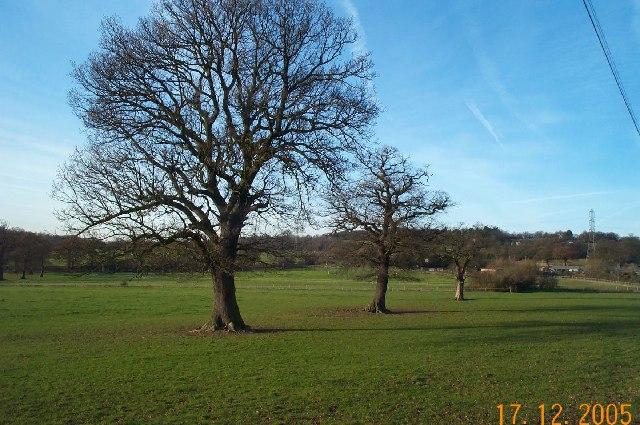Edgwarebury: Pasture