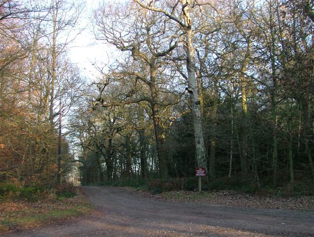 Track, Hardwick Wood