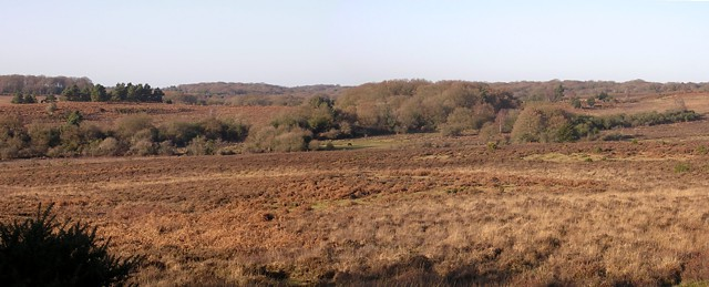Withybed Bottom panorama, New Forest
