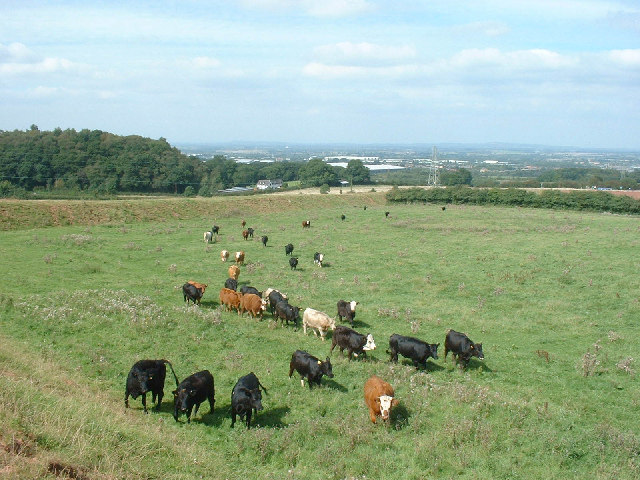 Pasture land east of Telford